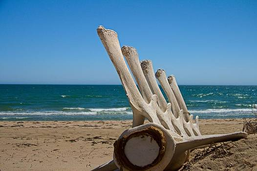 Whale Bones on the beach by Robert Bascelli