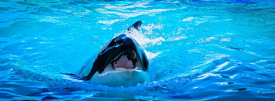 Whale by Jose Mena