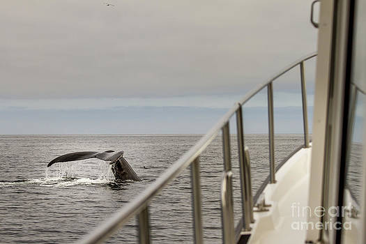 Darcy Michaelchuk - Whale off the Port Bow