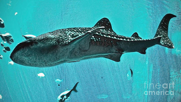 Whale Shark by Fred L Gardner