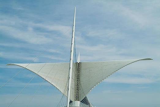 Devinder Sangha - Whale Tail