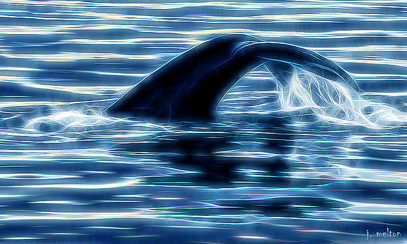 Whale Tail by Jack Melton