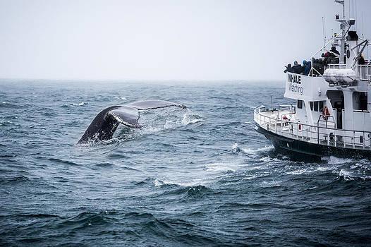 Francesco Riccardo  Iacomino - Whale Watching