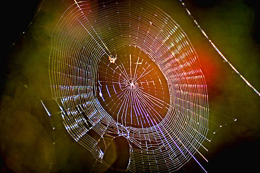 What A Web They Weave by Marilyn Holkham