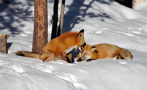 Matt Swinden - What does the fox says