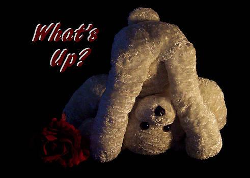 Regina  Williams  - What