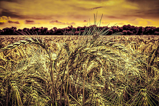 Ron Pate - Wheat Field