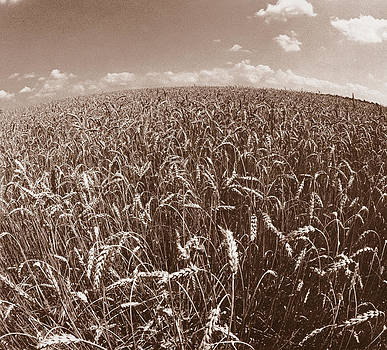 Wheat Fields Forever by Steven Huszar