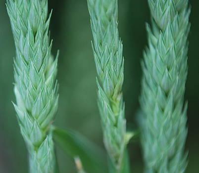 Wheat Tops by Lauren Mackay