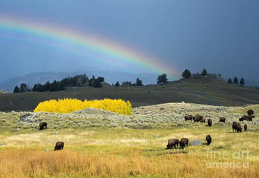 Where the Buffalo Roam by Deby Dixon