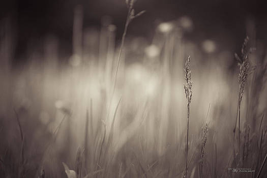 Where the Long Grass Blows by Dustin Abbott