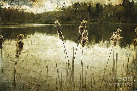 Ellen Cotton - Where Time Stands Still