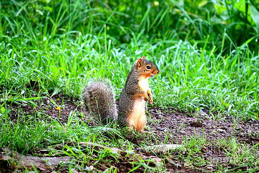 Where's the Nuts by Jay Nodianos