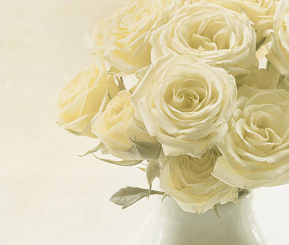 Kim Hojnacki - Whispers of Chiffon - Roses