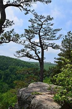 Whitaker Point Trail by Laureen Murtha Menzl