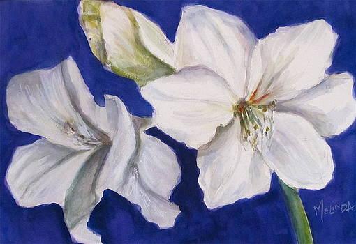 White Amaryllis  by Melinda Saminski