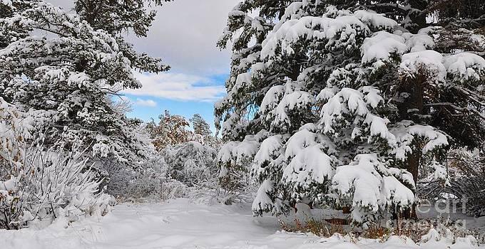 Classic Colorado Snow And Blue Sky by R Mahlouji