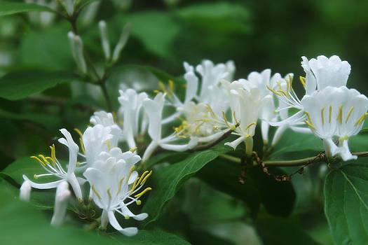 White and Green by Melissa Krauss