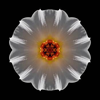White and Orange Daffodil Flower Mandala by David J Bookbinder