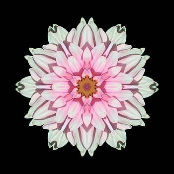 White and Pink Dahlia I Flower Mandala by David J Bookbinder