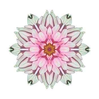 White and Pink Dahlia I Flower Mandala White by David J Bookbinder