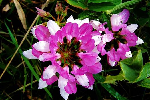 White and purple wildflower by Mark Malitz