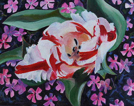 White And Red Tulip by Marcy Silverstein