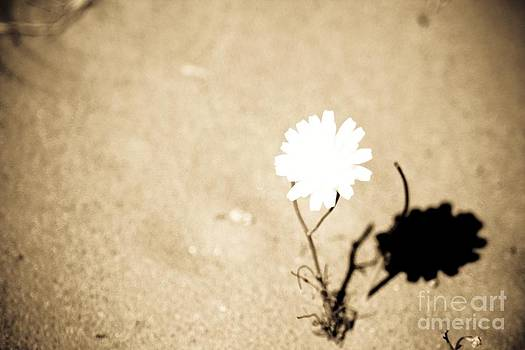 White and Shadow by  Garwerks  Photography