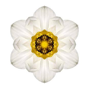 White and Yellow Daffodil I Flower Mandala White by David J Bookbinder
