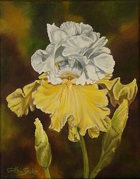 White and Yellow Iris by Cynthia Snider
