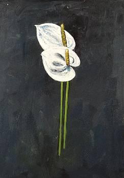 Usha Shantharam - White Anthurium couple
