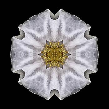 White Beach Rose I Flower Mandala by David J Bookbinder