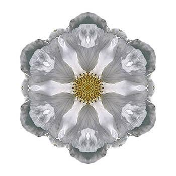 White Beach Rose III Flower Mandala White by David J Bookbinder