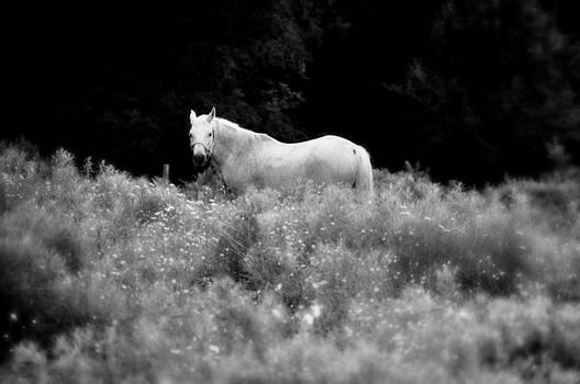 Mary Frances - White Beauty