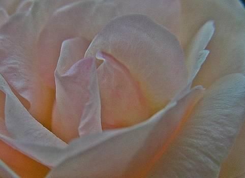White Beauty by Paresh Bhanusali