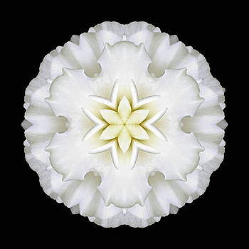 White Begonia I Flower Mandala by David J Bookbinder