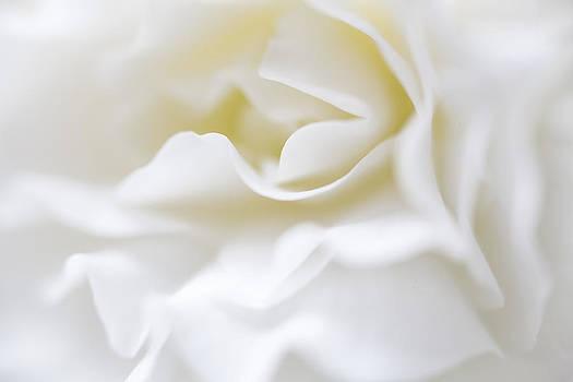 White Begonia Petals by Kim Aston
