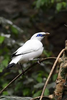 White bird by Goyo Ambrosio