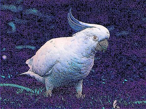 White Bird by Kathy Budd