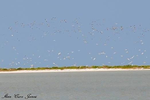 White Birds of Marco sland Florida by Anna Liza Jones