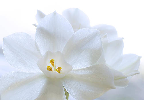 White Blooms by Mariola Szeliga