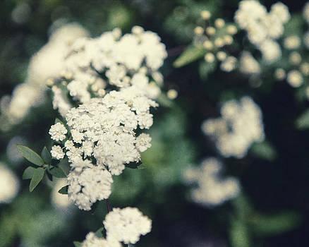 Lisa Russo - White Blossom