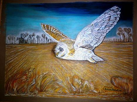 White breasted Barn owl  by Blossom Hackett