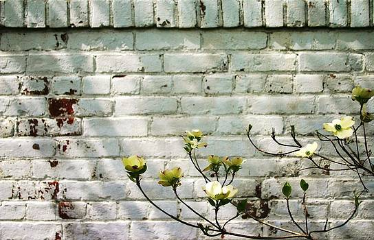 Robin Mahboeb - white bricks and blossoms 2