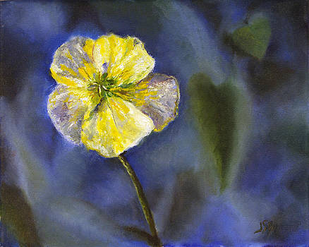 White Buttercup at ChesLen Preserve by Jennifer Braxton