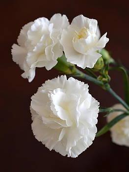 Bishopston Fine Art - White Carnations