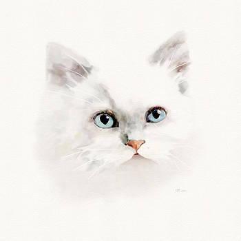Bamalam  Photography - White Blue Eyed Cat