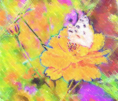 Cindy Nunn - White Checkered Butterfly 5