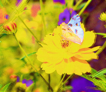 Cindy Nunn - White Checkered Butterfly 7