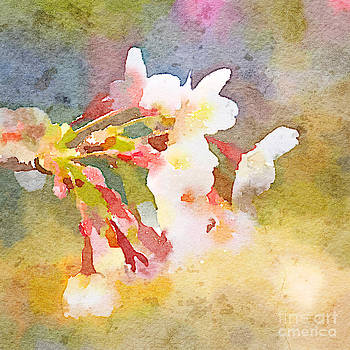 Beverly Claire Kaiya - White Cherry Blossoms Digital Watercolor Painting 1